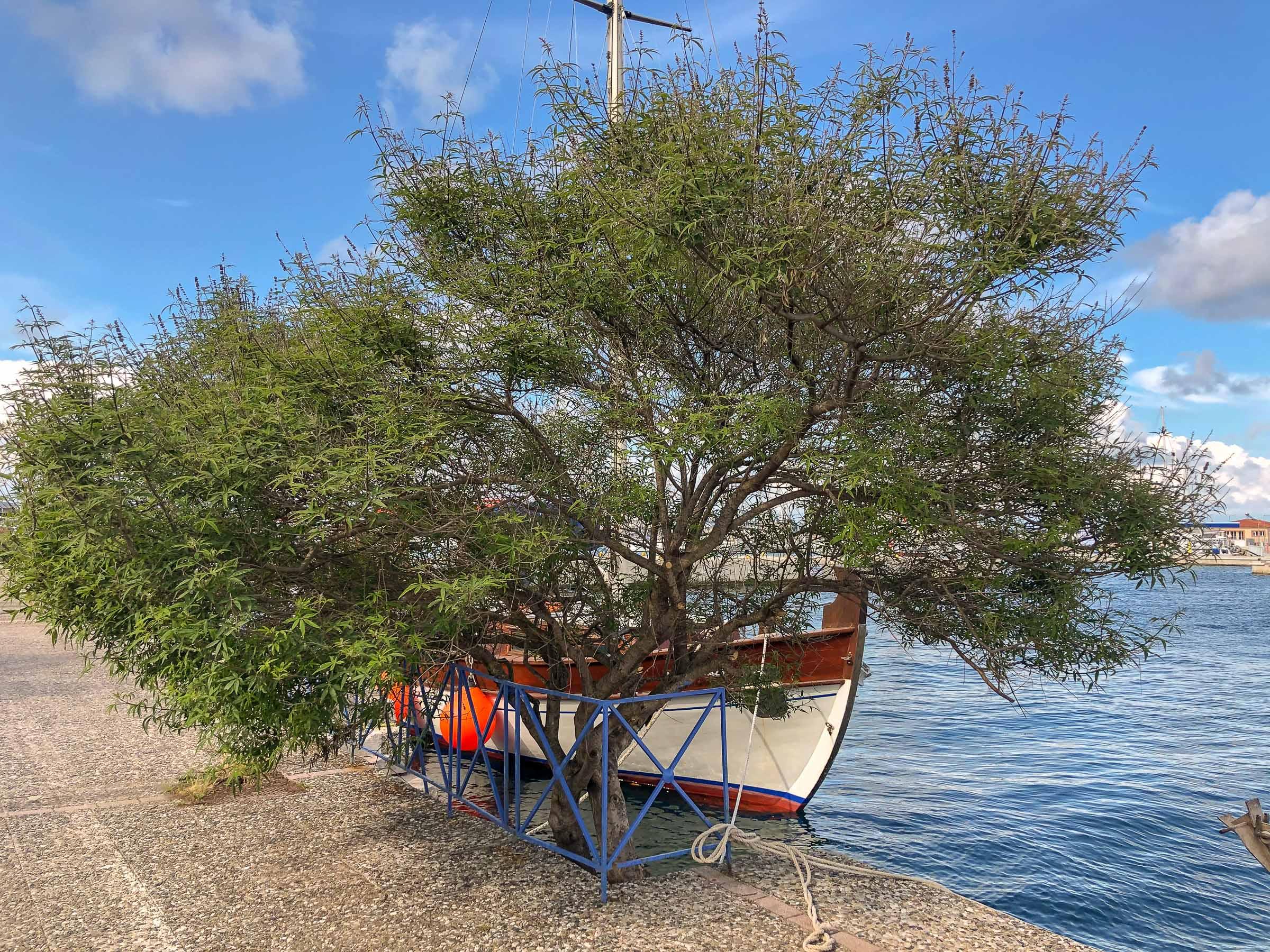 Lygaria next to the sea